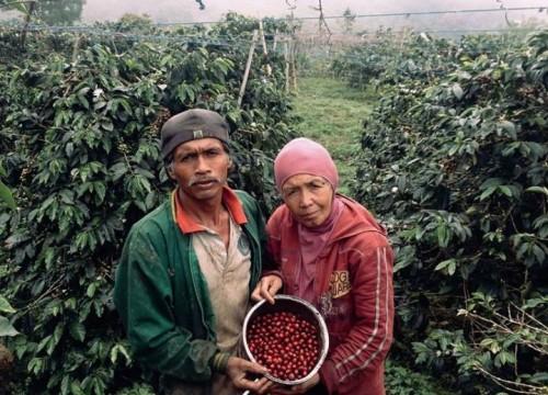 Kopi Bu Nur Koto Baru Sumatra Barat