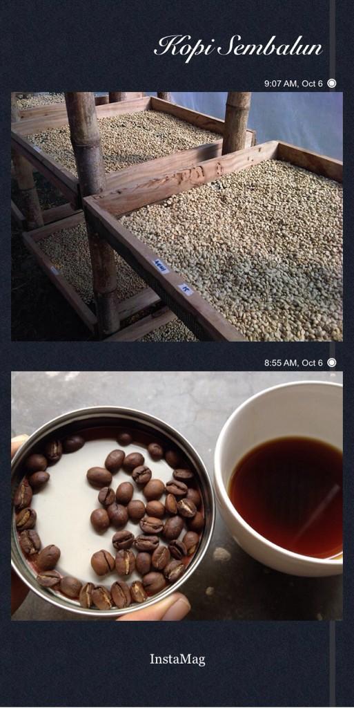 kopi Sembalun