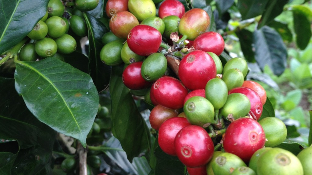 Central Java Coffee