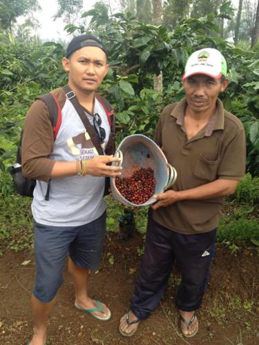 Coffee Java Tobacco