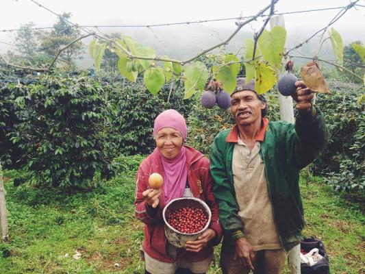 Bu Nur Dan Suaminya, Petani Kopi dari Koto Baru Solok