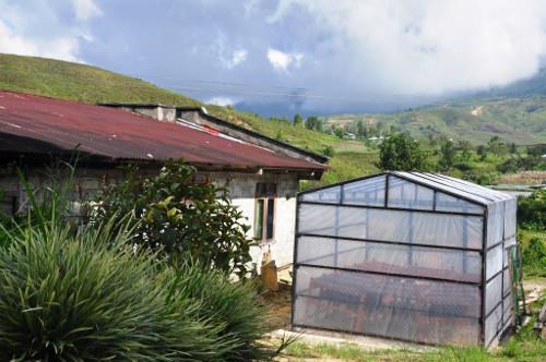Proses Pengeringan Kopi Arabica Aie Dingin Solok Sumatra Barat