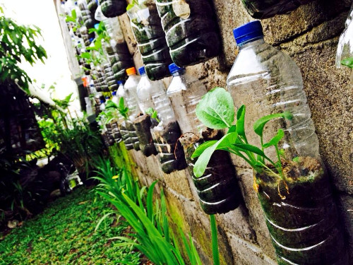 Kebun Klinik Kopi