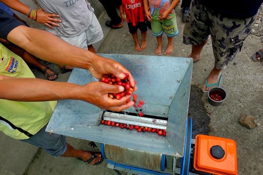 Proses Pengupasan Biji Kopi di Desa Ratamba Banjarnegara