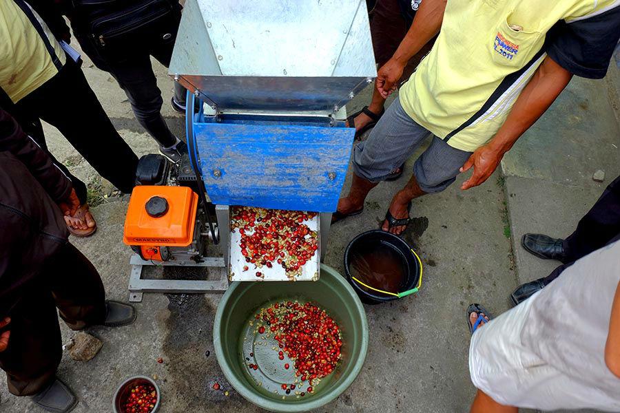 Proses pengupasan Biji Kopi di Ratamba Banjarnegara