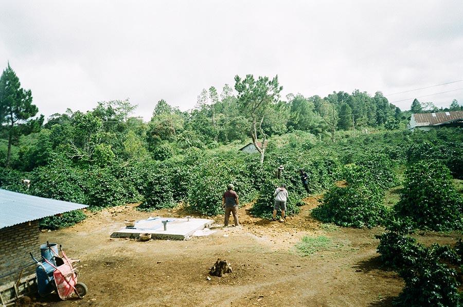 North Sumatra Coffee