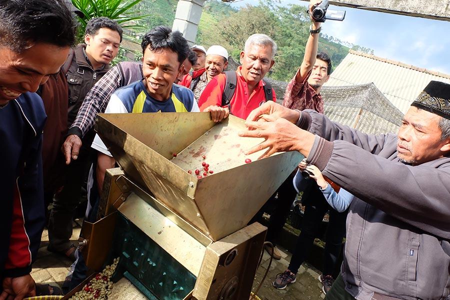 Kopi senggani Banjarnegara